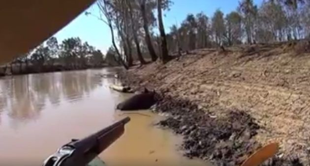 Wild Boar Hunting From a Kayak Gets You Up Close and Personal