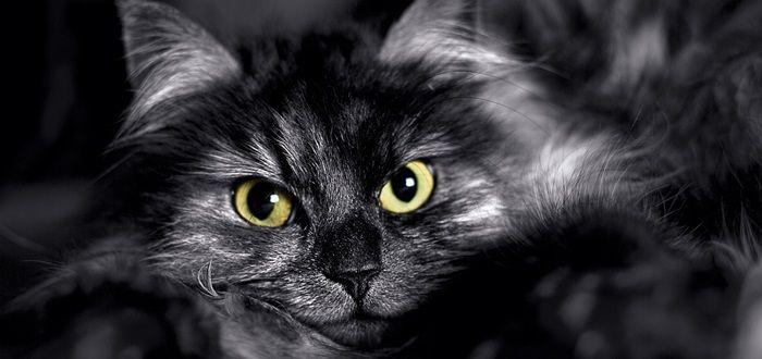 Kattenogen zijn fascinerend mooi. Maar wat de kat ziet, is voor ons lastig vast te stellen. Heb je je wel eens afgevraagd waar je kat naar zit te staren?
