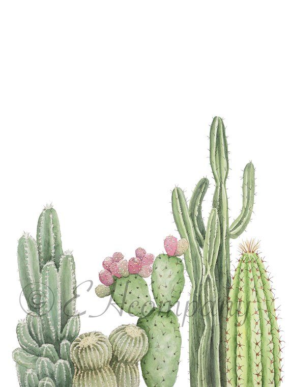 Assorted Cacti Downloadable And Printable Watercolor Art