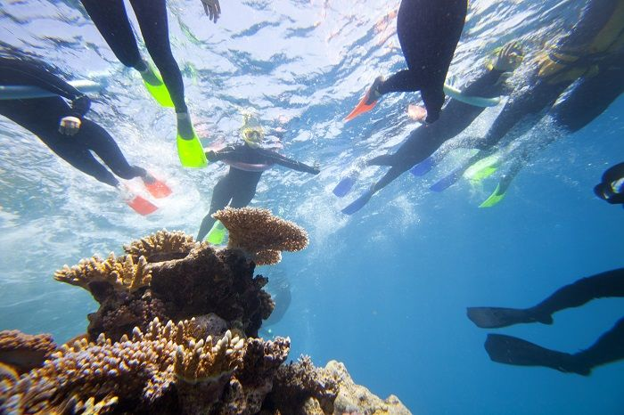 When a day trip to the Great Barrier Reef is not enough, join one of our 2 or 3 day live aboard tours to get in more snorkelling time