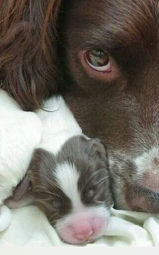 Mamma watching over her wee little one