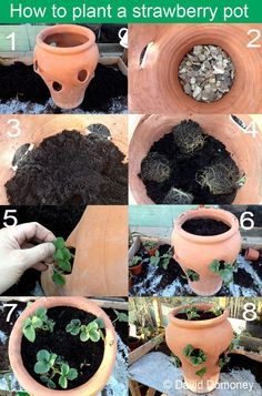 How to plant a terracotta strawberry pot. Step by step instructions with pictures to planting a strawberry pot with holes in it via www.daviddomoney.com