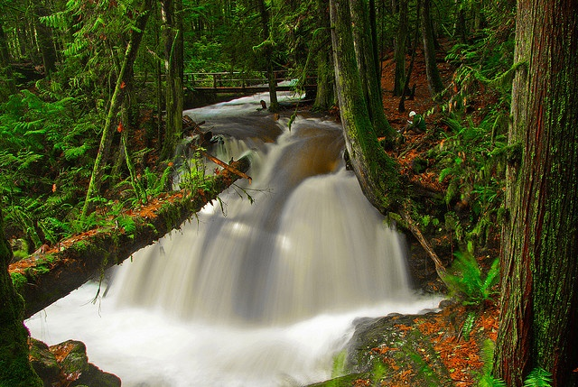 Cliff Gilker Falls near Sechelt, BC. My sisters and I went splashing around in these falls one summer. It's like being in a fairyland - there's even a warlock who lives in a trailer nearby! He even has a cauldron!
