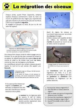 Documentaire - La migration des oiseaux