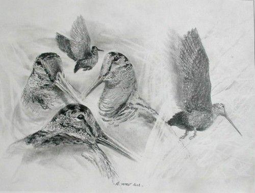 Bécasse - Artiste peintre animalier - ©Philippe TATRE -  Dessins & Aquarelles