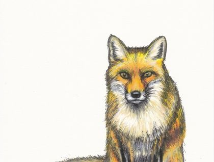 Fox Ink Pen and Watercolour sketch