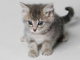 Resultado de imagen de gatos bebes tiernos