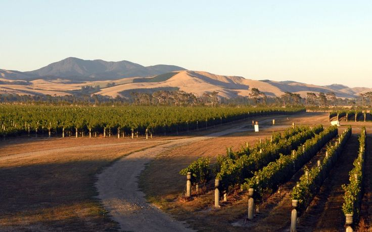 Read more about Martinborough's award-winning Pinot noir wines.