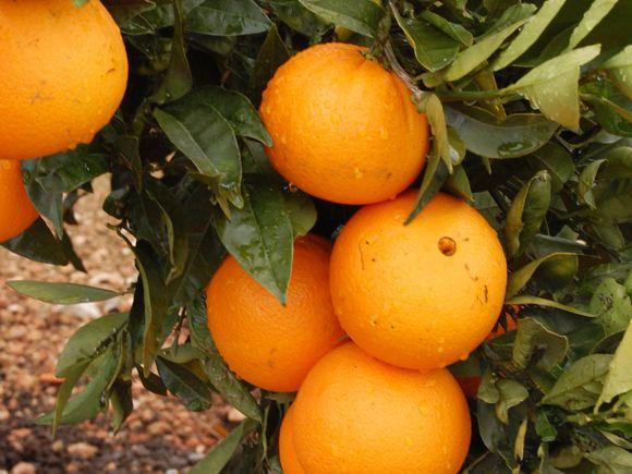 Árvores de fruto: chegou o momento de cuidar delas! | Jardiland Portugal