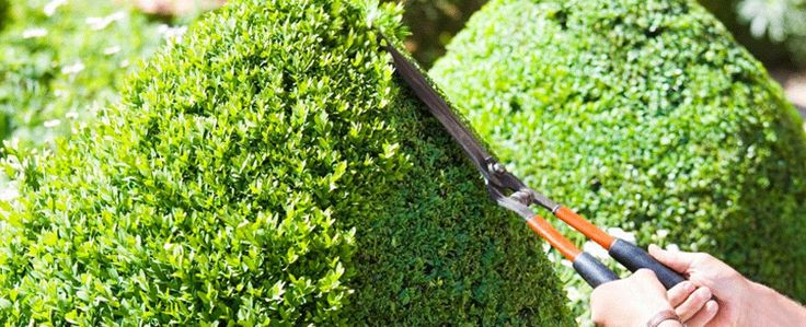 Gardener melbourne is one of the leading company provides several gardening cleaning, garden rubbish removal or garden cleanup services at a pocket-friendly budget. Now people have no need to worry about their garden cleaning, leave your problems on our experts. Visit today!
