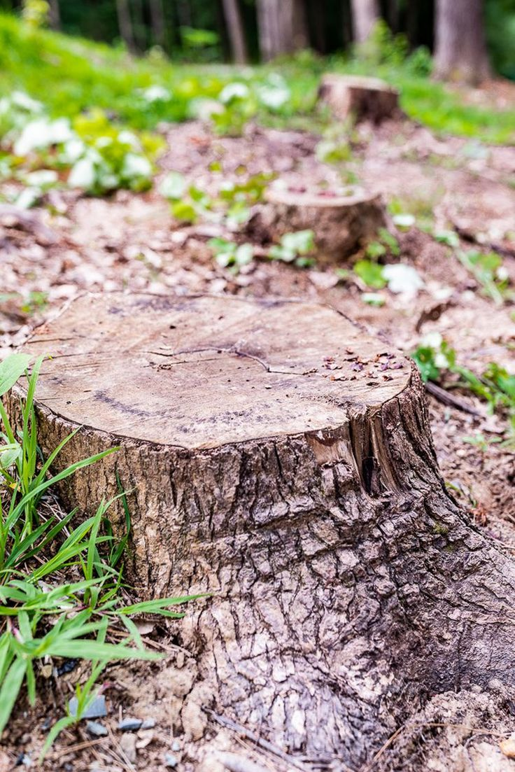 Easy and CostEffective Ways to Remove a Tree Stump in