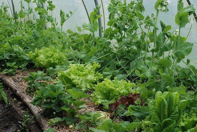 Plantas antagônicas e plantas companheiras: saiba combinar. Teia Orgânica…