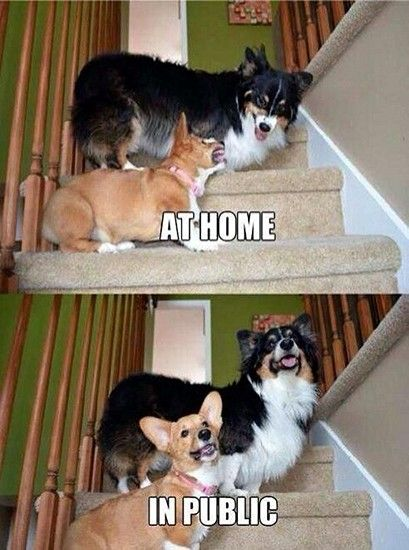 Funny Pictures With Captions (25 Photos)