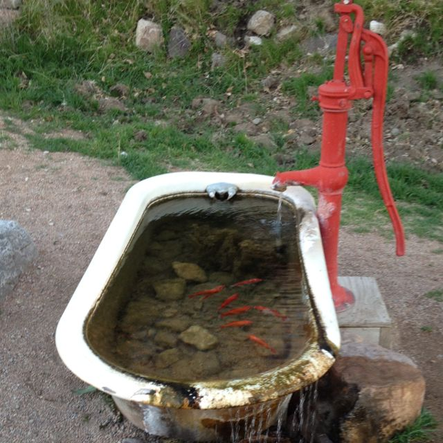 49 best old porcelin bathtub water features images on for Bathtub fish pond