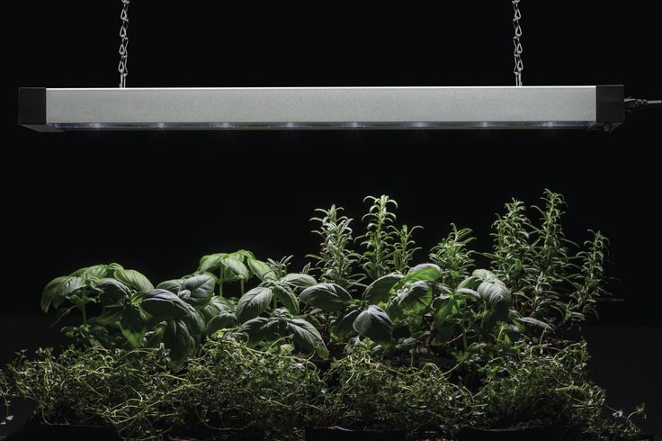 Acuity Brands Lighting LED Grow Light by Lithonia Lighting  The Lithonia Lighting® LED Grow Light is ideal for home or restaurant kitchen growers wanting to indoor garden all year-round. Multi-spectrum with switchable color options, this grow light provides for a variety of growing needs depending on plant species, season of growth, and user preference.
