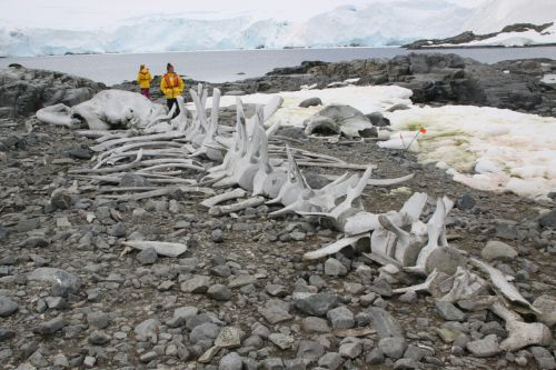 Le cimetière de baleines sur l'île de la Déception - croisière en Antarctique