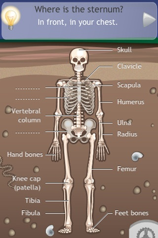 17 best skeletal images on Pinterest | The human body, Human body ...