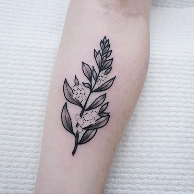Fun little Australian native branch for the beautiful Trish! Her first tattoo and she sat so well! @the_darling_parlour