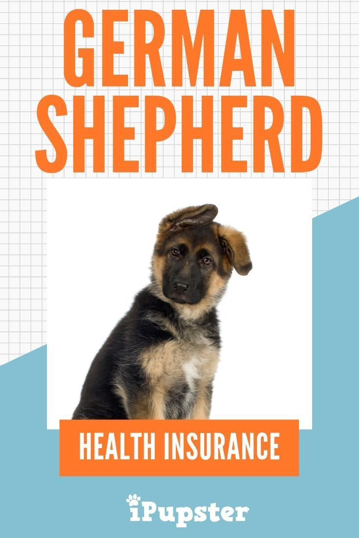First Time German Shepherd Owner Advice On What Pet Insurance You Should Get Health Insurance Options Health Insurance Best Health Insurance
