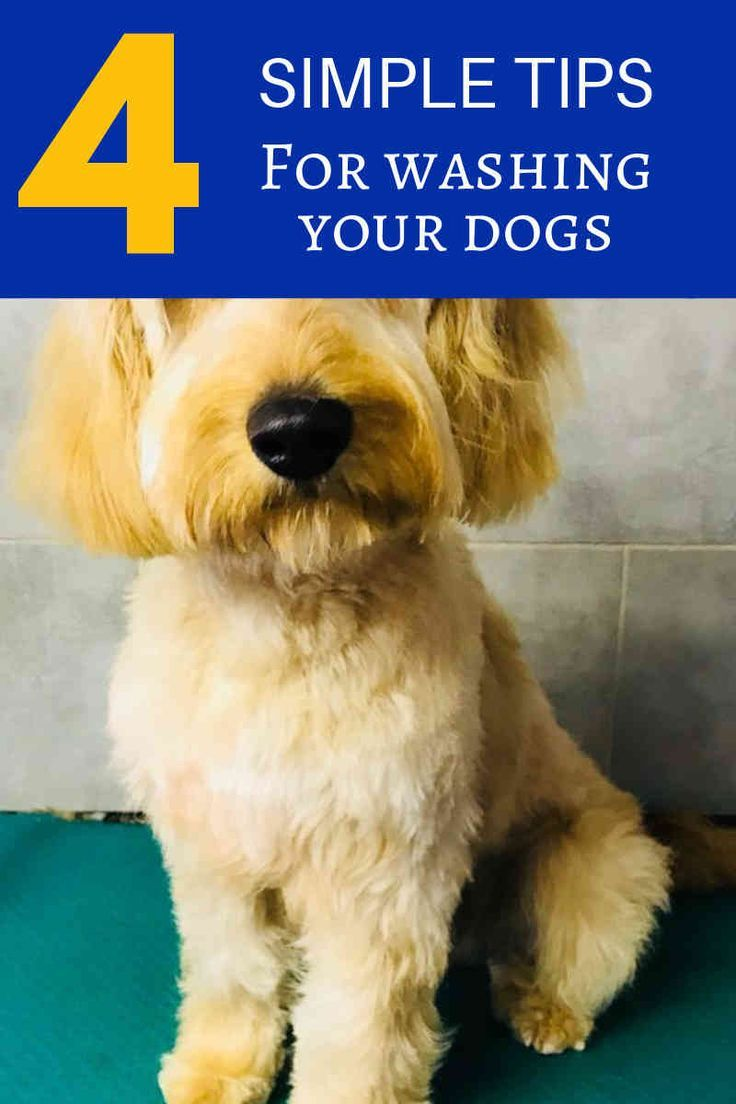 Benefits Of Stainless Steel Dog Grooming Tubs Requirements For Pet Grooming Business Dog Grooming Tools At Home Dog Grooming Tips Dog Grooming Dog Grooming Supplies