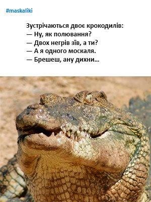 #maskaliki