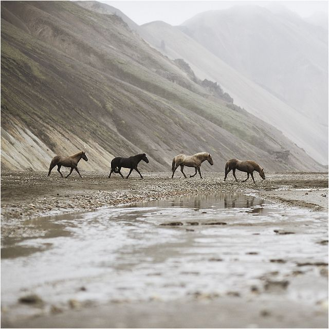 i love horses. (photo by ho1gersson)