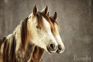 Akhal-Teke mares by MsCarmen on deviantART
