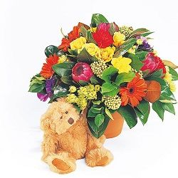 Birthday flowers and gifts: 'Snuggles'