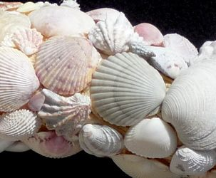 Seashell Wreaths by Nancy - Home