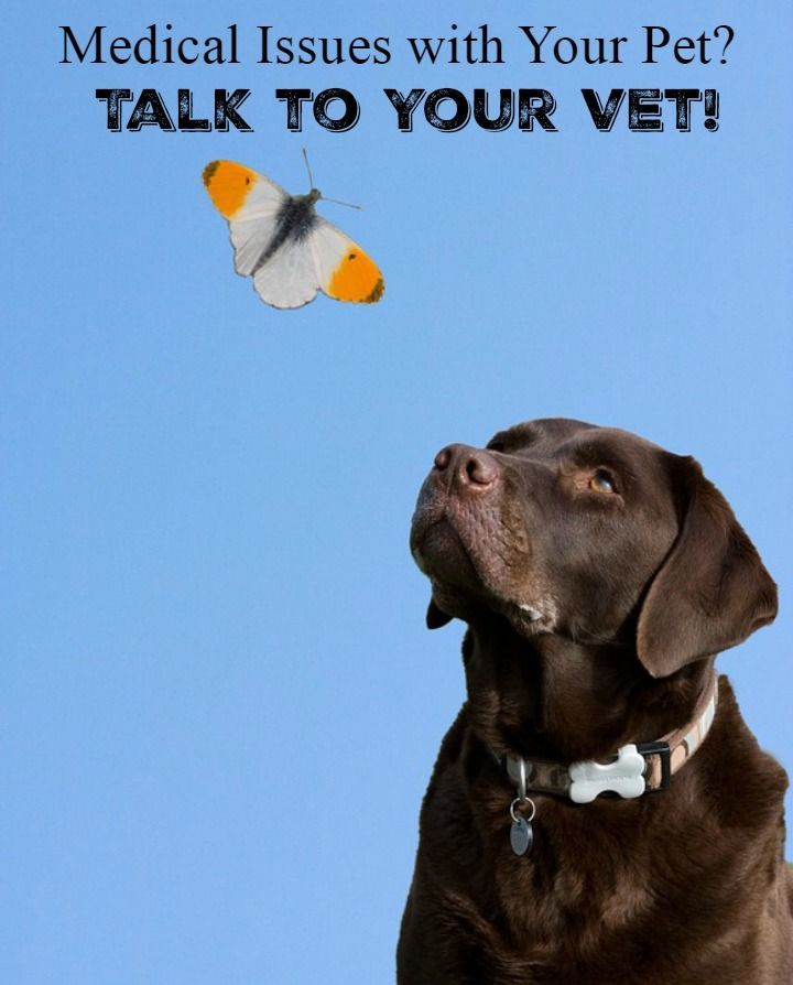 Medical issues with pets should never be taken lightly. When medical issues arise with your pet, you should always consult your vet.