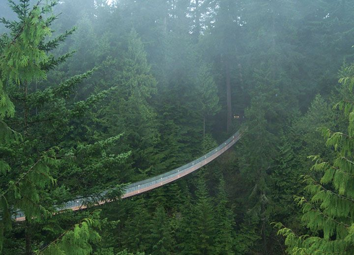 The Capilano Supsension Bridge in North Vancouver, Canada.  I went here about 10 years ago with my Aunt and it is breathtaking.