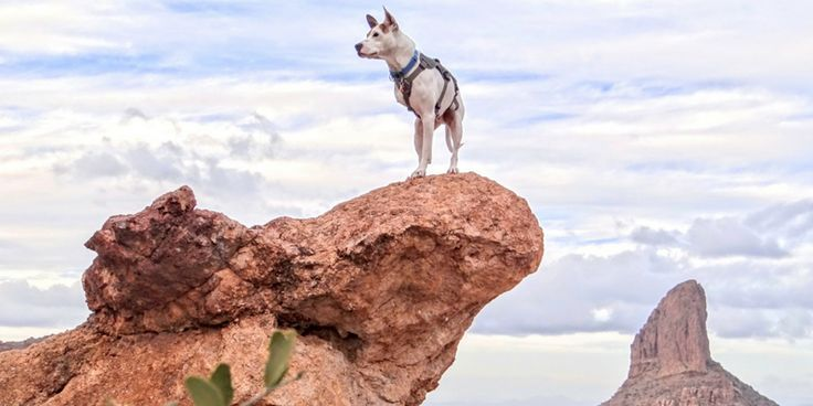 """Teaching place is quite simple! Lead your dog with a tasty treat to whatever it is you want your dog to be on and say """"Place"""" or whatever cue you want (just be consistent!).  #adventure #camping #dog https://campingwithdogs.com/blogs/news/teach-your-dog-to-pose-like-the-majestic-beast-they-are"""