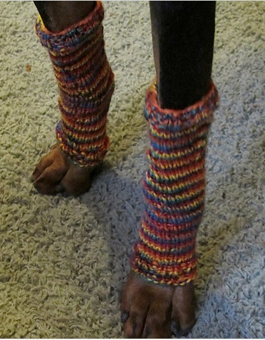 Dog Leg Warmers - what my spoiled pups need