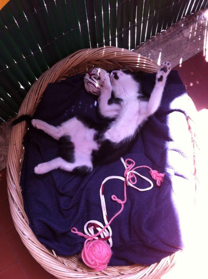 E poi dorme al sole
