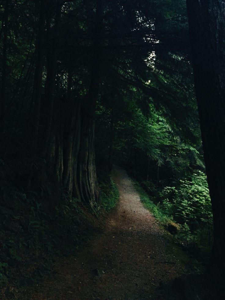 #explore#pnw #explorebc #britishcolumbia #forest #trees #light