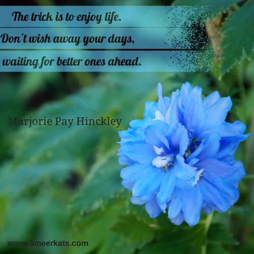 The trick is to enjoy life. #life