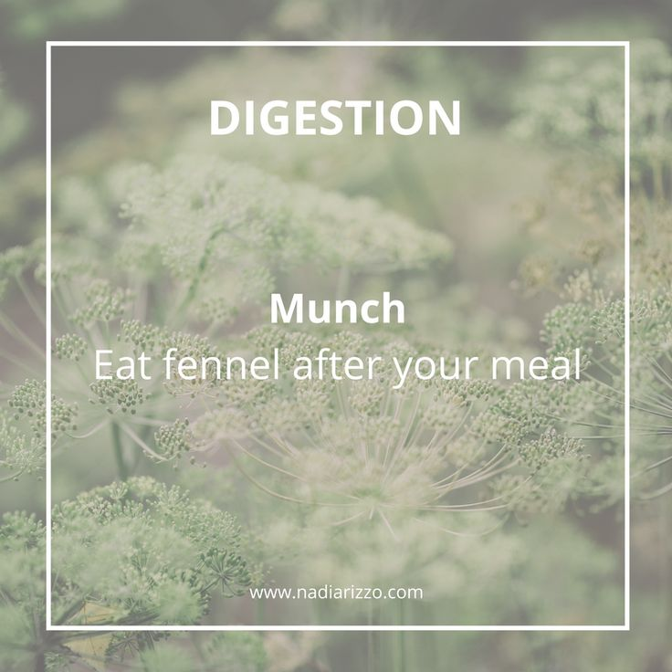 Eat fennel after your meal to help with digestion. #fennel #munch #digestion #nutrition #tips
