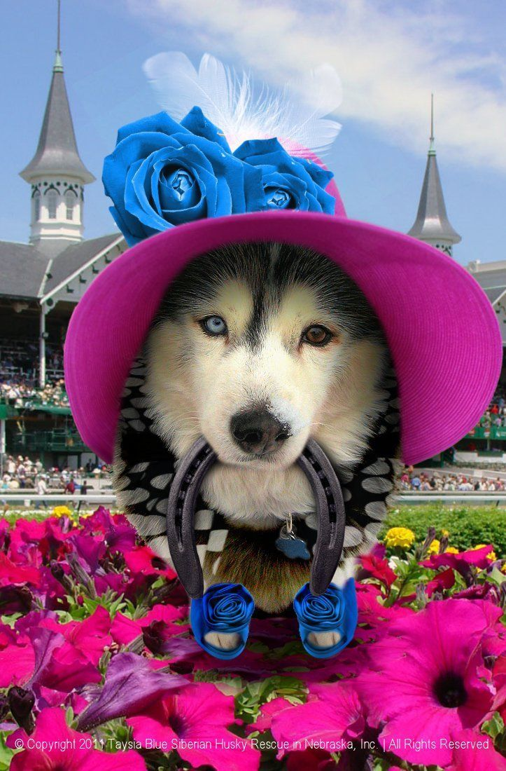 Ready For The Derby Crazy Dog Lady Most Beautiful Dog Breeds