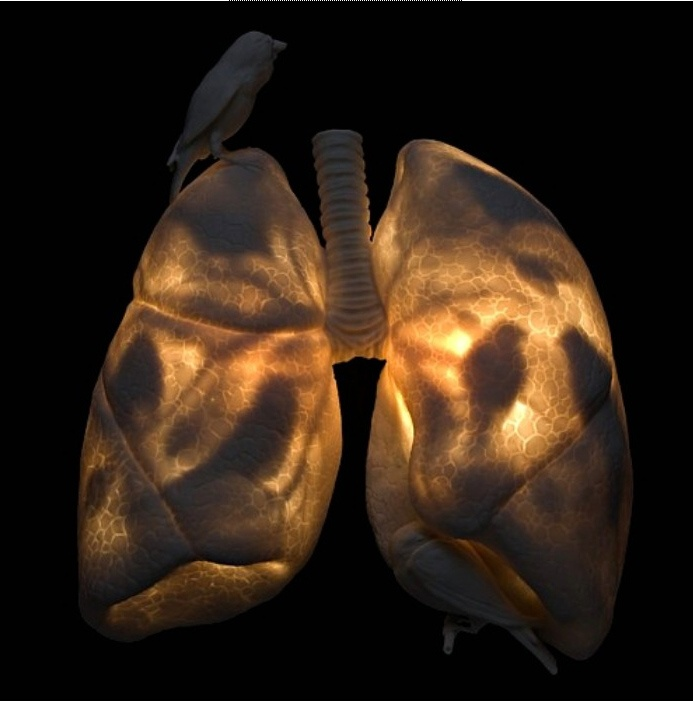 100 Best Images About Respiratory On Pinterest Croup