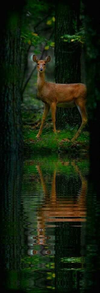 """As the deer pants for streams of water, so my soul pants for you, my God."" ‭‭Psalm‬ ‭42:1‬ ‭NIV"