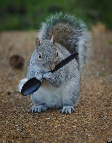 Squirrel Images Funny - Yahoo Image Search Results
