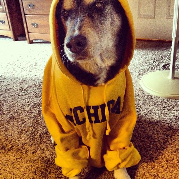 Michigan hoodies were made for dogs.