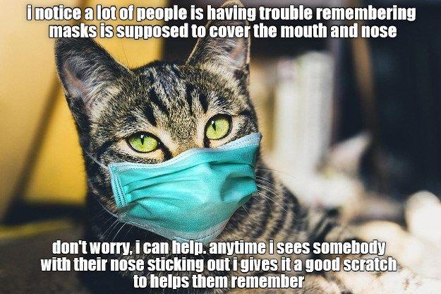 Thank You Kitty Funny Cat Memes Husky Funny Cat Memes