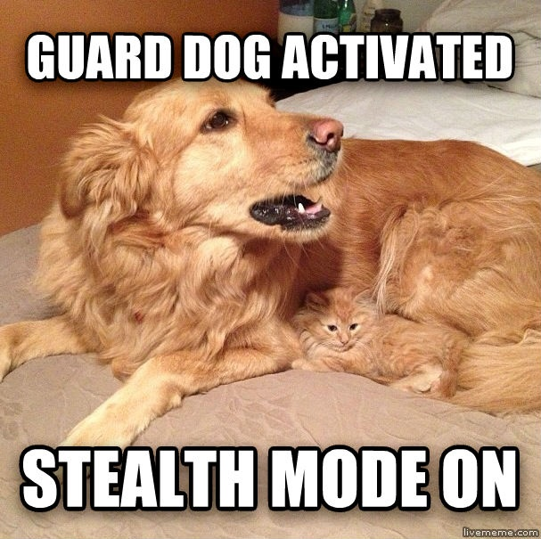 Cat And Dog Memes
