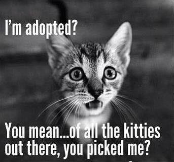 "True love found! ""I'm adopted? You mean...of all the kitties out there, you picked me?"" from Animal Rescue Site                                                                                                                                                     More"