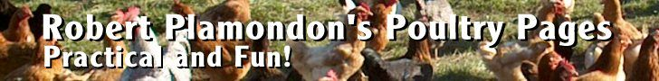 Norton Creek Poultry and Chicken Lore - fencing in chickens with only one or two electric wires - best chicken blog - based the old ways