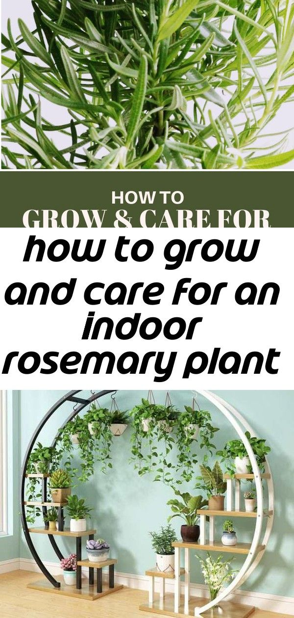 how to care for herb plants indoors