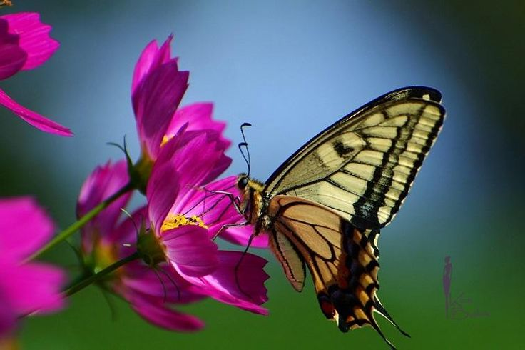 Metamorfózis (átalakulás, változás), játékosság, könnyedség.