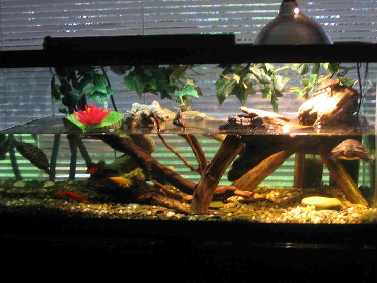 Amazon Water Turtles Tanks Turtle Terrarium Ideas