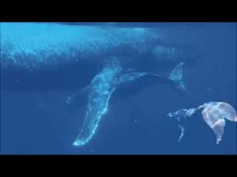 Real Mermaid Proof and Evidence Caught in 2014!? - YouTube